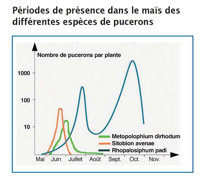 Périodes de présence dans le maïs des différentes espèces de pucerons