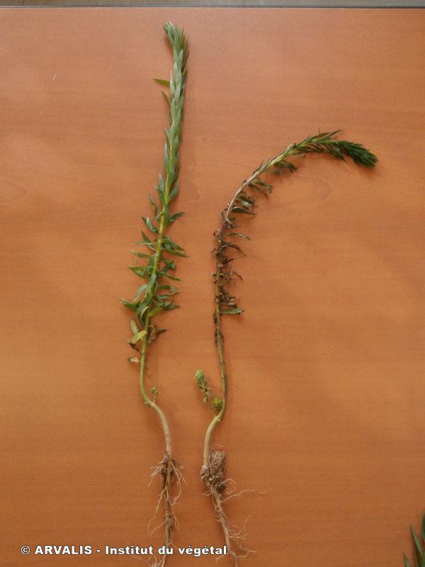Identification plante Img