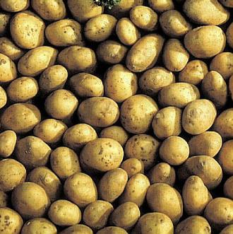 Les fiches arvalis vari t s produits accidents en grandes cultures - Tableau pomme de terre varietes ...